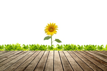 Wooden floor with green grass and sunflower blooming photo