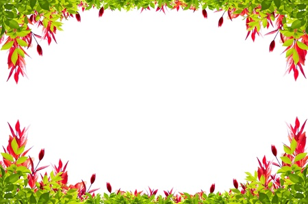 leaves frame isolated on white background photo