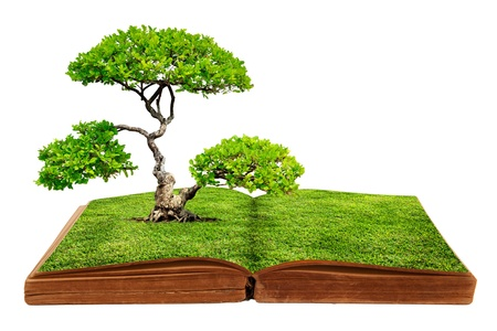 The big tree growth from a book isolated on white background