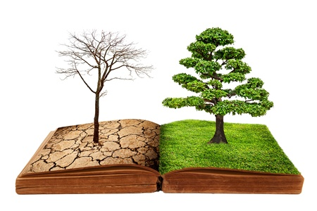 creative ideas: The big tree growth from a book isolated on white background, Creative concept image global warming concept.