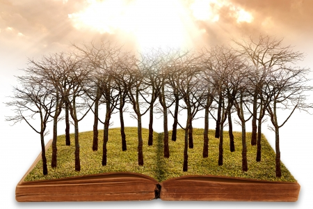Creative concept image global warming concept. dry land on the open book.
