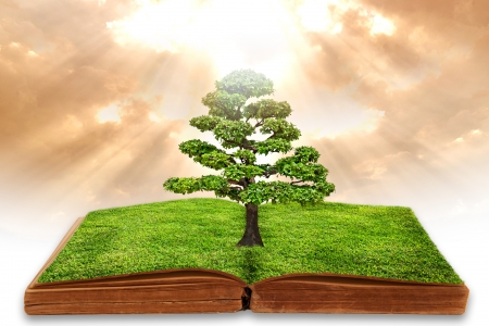 school of life: The big tree growth from a book with beautiful sky background