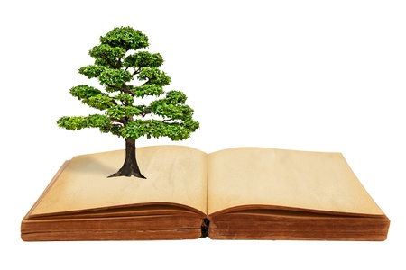 The big tree growth from a book isolated on white background photo