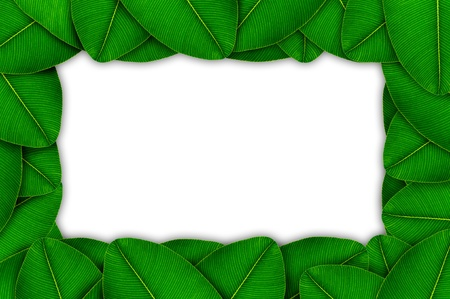 Picture frame with green leaves on white background Stock Photo - 17111094
