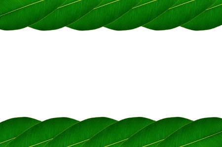 Picture frame with green leaves on white background Stock Photo - 17111085
