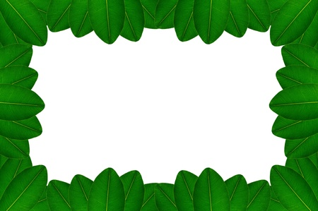 Picture frame with green leaves on white background Stock Photo - 17111087