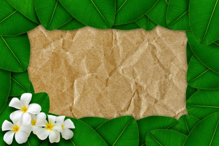 Green leaves with plumeria flowers on recycled paper Stock Photo - 17125807