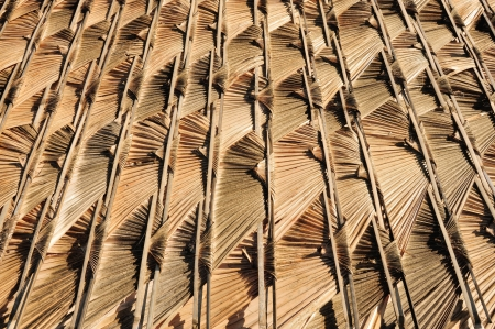 thatch: Asian thatch roof texture