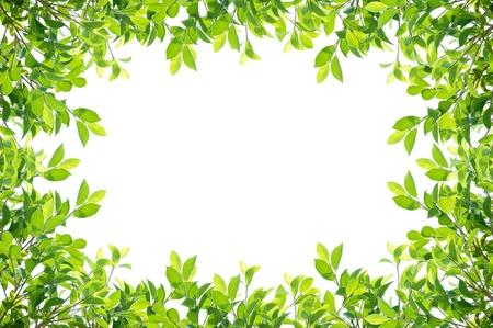 bordure vigne: cadre de feuilles isol� sur fond blanc