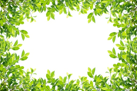 leaves frame isolated on white background Stock Photo - 17964942