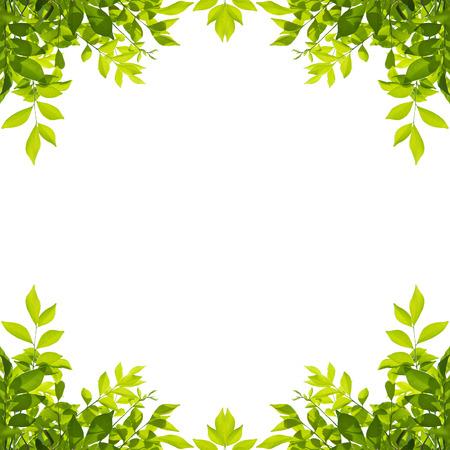 Grüne Blattgrenze getrennt auf weißem Hintergrund. Beschneidungspfade enthalten.