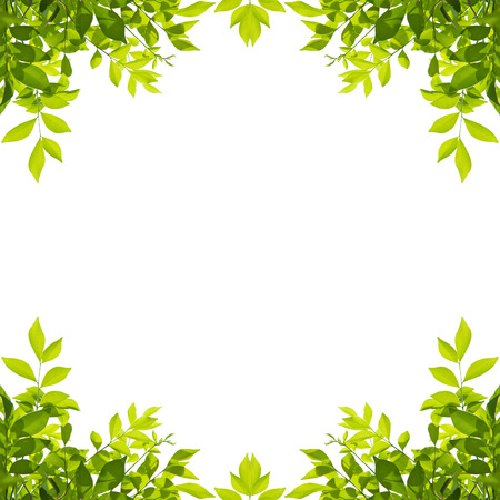 Green leaf border isolated on white background. Clipping paths included. Imagens - 72952930