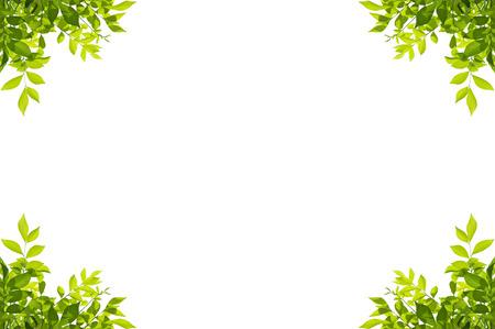 白い背景に分離された緑の葉のフレーム