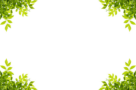 Green leaves frame isolated on white background Reklamní fotografie