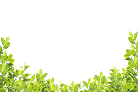 Groene bladgrens die op witte achtergrond wordt geïsoleerd. Clipping paths inbegrepen. Stockfoto
