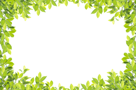 녹색 잎 테두리 흰색 배경에 고립. 클리핑 경로가 포함되어 있습니다.