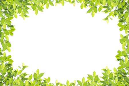 Bordo verde foglia isolato su sfondo bianco. Tracciati di ritaglio inclusi. Archivio Fotografico - 72952936