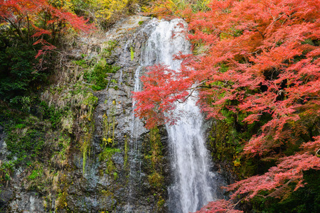 OSAKA, JAPAN -NOVEMBER 26, 2013: Mino waterfall full of tourists take photo in Autumn season Red Maple Leaf Fall Foliage, Minoo (Minoh or Mino) it is one of the best places in the Kansai, Osaka prefecture, Japan