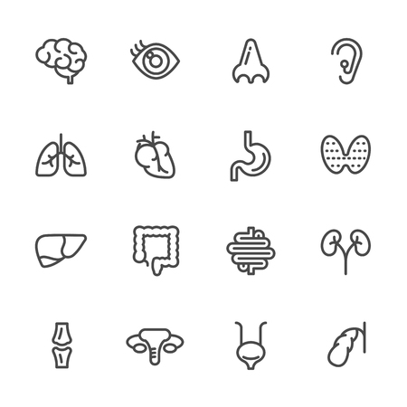 Visceral and anatomy icons, Vector line icons set Stock Vector - 83082510