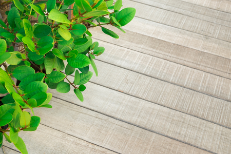 green leaf with floor texture, Wooden plank in the garden Фото со стока