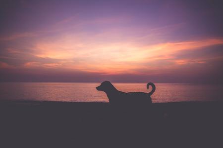 stood: Dog stood in the morning.