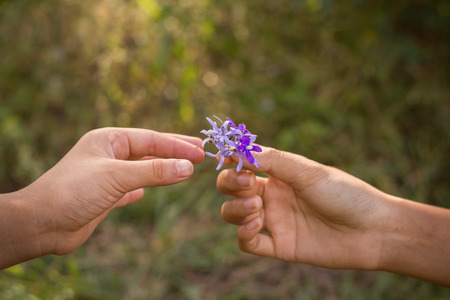 small purple flower: Dirty hands giving a small purple flower to friend.