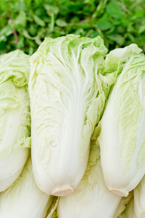 Chinese Cabbage on market.
