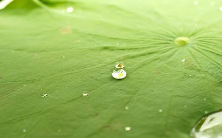 crecimiento planta: Gota de perlas de agua en la hoja verde Foto de archivo
