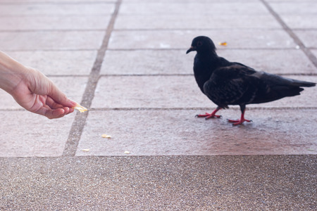 feed the poor: Bird feeding, focused at fingers. Stock Photo