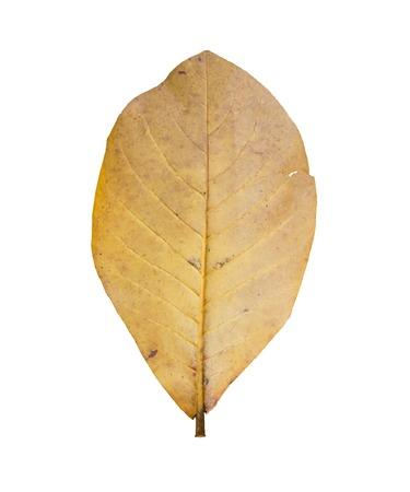 dry leaf: Dry leaf on concrete background. Stock Photo