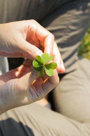 marsilea: Asian Womens hands holding lucky clover leaf on green grass background.