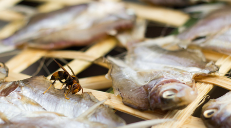 stinger: Wasp on dried fish.