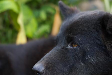 black: Black dog. Stock Photo