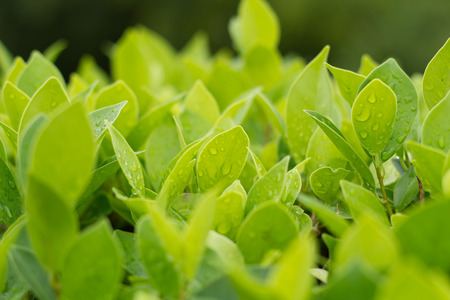assort: Green leaf background