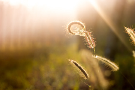 medow: Meadow flower with sun rays, floral background.