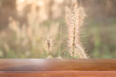 medow: Soft focus of Meadow flower with sun rays, floral background.