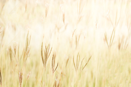 out door: Soft focus Field of grass out door landscape ,vintage tone colour. Stock Photo