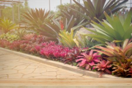 walk board: Wooden board with Bromeliad plant with walk way in garden. Stock Photo