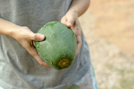 green papaya: Green papaya.Hands holding green papaya.Fresh green papaya.
