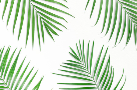 Tropical palm leaves on white background. Minimal nature. Summer Styled.  Flat lay.  Image is approximately 5500 x 3600 pixels in size.