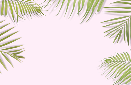 Tropical palm leaves on pink background.