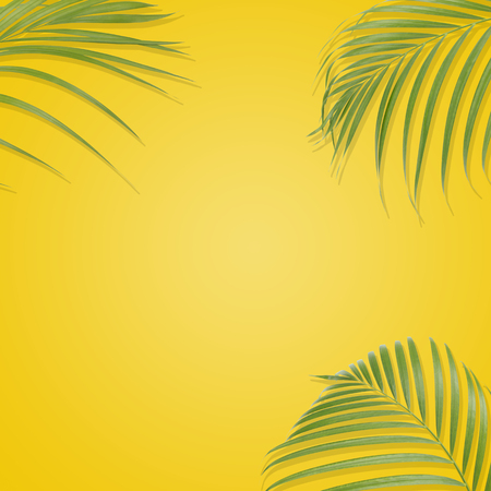 lay: Tropical palm leaves on yellow background. Minimal nature. Summer Styled.  Flat lay.  Image is approximately 5000 x 5000 pixels in size. Stock Photo