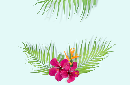 lay: Tropical palm leaves on light blue background. Minimal nature. Summer Styled.  Flat lay.  Image is approximately 5500 x 3600 pixels in size.