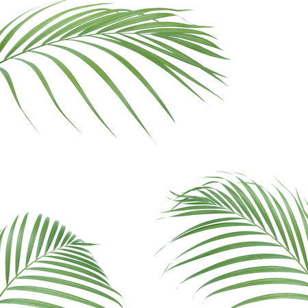 Tropical palm leaves on white background. Minimal nature. Summer Styled.  Flat lay. Image is approximately 5000 x 5000 pixels in size.