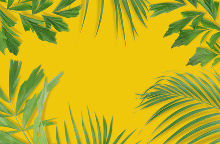 Tropical palm leaves on pink background. Minimal nature. Summer Styled.  Flat lay. High resolution 5500 x 3600 pixels in size.