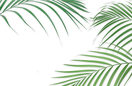 Tropical palm leaves on white background. Minimal nature. Summer Styled.  Flat lay. Image is approximately 5500 x 3600 pixels in size. Stock Photo