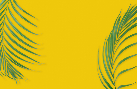 lay: Tropical palm leaves on yellow background. Minimal nature. Summer Styled.  Flat lay.  Image is approximately 5500 x 3600 pixels in size.
