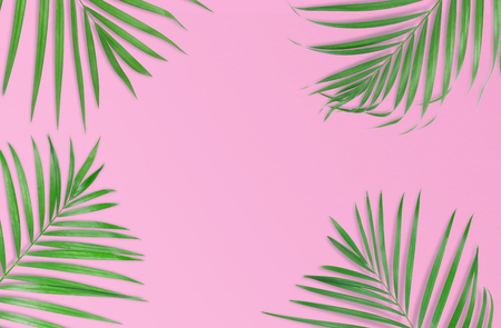 Tropical palm leaves on pink background. Minimal nature. Summer Styled.  Flat lay.  Image is approximately 5500 x 3600 pixels in size. Stock Photo