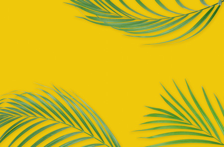 Tropical palm leaves on yellow background. Minimal nature. Summer Styled.  Flat lay.  Image is approximately 5500 x 3600 pixels in size.