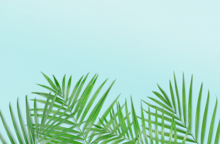 Tropical palm leaves on light blue background. Minimal nature. Summer Styled.  Flat lay.  Image is approximately 5500 x 3600 pixels in size.
